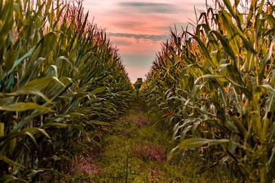 Could USDA Outlook Forum Take 2 Million Acres Off US Corn?