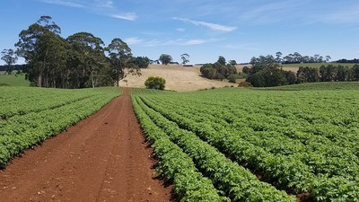 Why China Is Buying Australian Farmland... and Its Impact